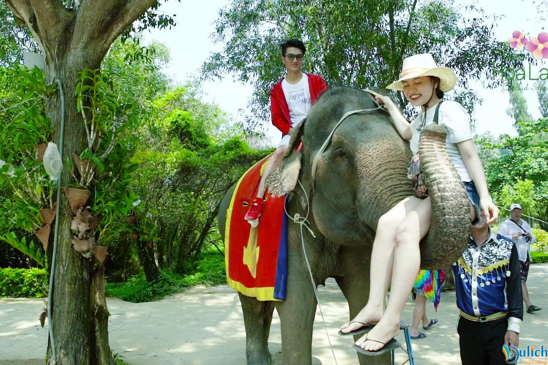 xiếc voi trên đảo hoa lan nha trang