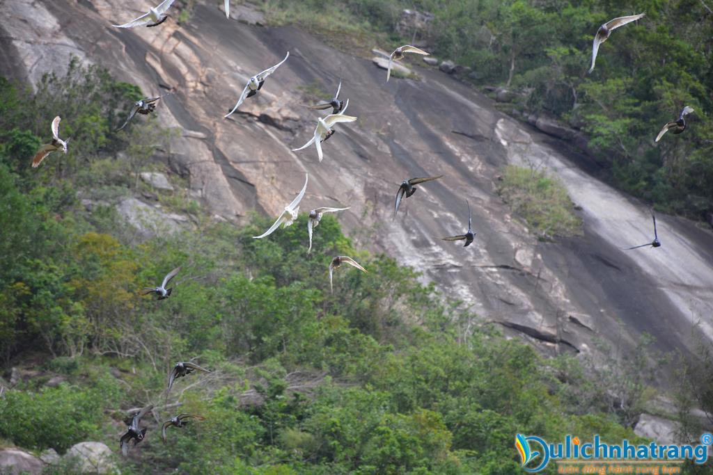 vườn chim trên đảo hoa lan nha trang